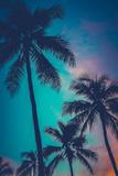 Retro Sunset Hawaii Palm Trees Fotografisk tryk af Mr Doomits