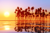 Coconut Palms at Sunset Photographic Print by  lekcej