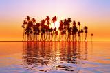 Sun over Coconut Palms Photographic Print by  lekcej