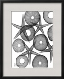Beach Stars and Sea Urchins Close Up Prints by Albert Koetsier
