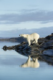 Polar Bear on Harbour Islands, Hudson Bay, Nunavut, Canada Photographic Print by Paul Souders