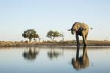African Elephant, Chobe National Park, Botswana Photographic Print by Paul Souders