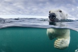 Underwater Polar Bear by Harbour Islands, Nunavut, Canada Photographic Print by Paul Souders