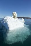 Polar Bear on Iceberg, Hudson Bay, Nunavut, Canada Photographic Print by Paul Souders