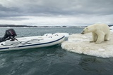 Polar Bear on Hudson Bay Pack Ice, Nunavut, Canada Photographic Print by Paul Souders