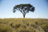 Acacia Tree, Makgadikgadi Pan, Botswana Photographic Print by Paul Souders