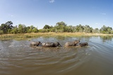 Aerial View of Hippo Pond, Moremi Game Reserve, Botswana Photographic Print by Paul Souders
