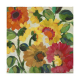 Yellow Zinnias Reproduction procédé giclée par Kim Parker