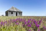 Abandoned Hudson Bay Company Trading Post, Canada Photographic Print by Paul Souders