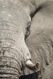 Bull Elephant, Makgadikgadi Pans National Park, Botswana Photographic Print by Paul Souders