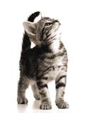 Little Curious Kitten Masterprint