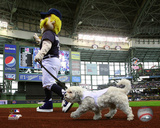 Hank the Dog, the Milwaukee Brewers Mascot 2014 Photo