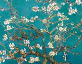 Amandier en fleurs Posters par Claude Monet