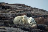 Polar Bear and Cub Resting along Hudson Bay, Nunavut, Canada Photographic Print by Paul Souders