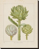 Artichokes Stretched Canvas Print by Besler Basilius
