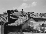 Roofs in Ravenna Photographic Print by Otto Zenker
