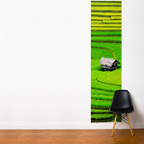 Rice Field Wall Mural