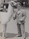 Baby at the Zoo with a Llama Photographic Print by Luigi Leoni