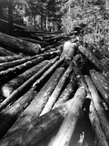 The Cut of the Woods Photographic Print by Dusan Stanimirovitch