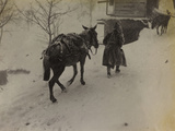 Soldier with Mule in the Valley Doblar During the First World War Photographic Print by Luigi Verdi