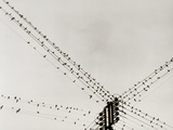 Swallows Perched on a Power Line Photographic Print by Dusan Stanimirovitch