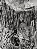 Tree Trunk Photographic Print by Dusan Stanimirovitch