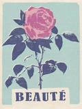 Beaute - Beautiful - Rose Wall Decal by  Junk Food
