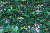Green Liana Photographic Print by  prajit48
