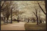 Springtime Stroll Framed Canvas Print by Natalie Mikaels