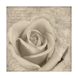 Vintage Rose II Print by Lisa Wolk