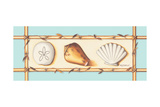 Seashells Posters by Kathy Middlebrook