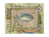 Blue-Gilled Sunfish Prints by Anita Phillips