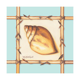Bamboo Seashell I Prints by Kathy Middlebrook