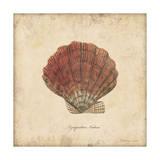 Shells II Posters by Stephanie Marrott