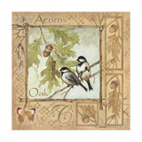 Acorns Prints by Anita Phillips