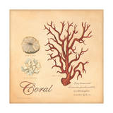 Coral Posters by Stephanie Marrott