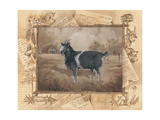 Goat Prints by Anita Phillips