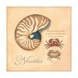 Nautilus Posters by Stephanie Marrott