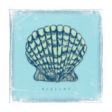 Scallop Posters by Stephanie Marrott