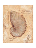 Brown Paper Nautilis Prints by Stephanie Marrott