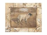 Sheep Prints by Anita Phillips
