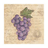 Grapes I Posters by Stephanie Marrott