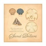 Sand Dollars Prints by Stephanie Marrott