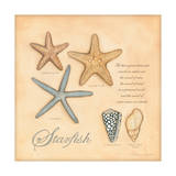 Starfish Posters by Stephanie Marrott