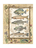 Fish Sampler Prints by Anita Phillips