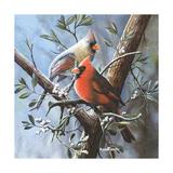 Cardinal Prints by Kevin Daniel