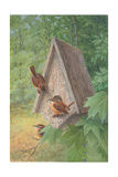 Bird House Poster by Bob Henley
