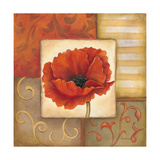 Orange Poppy I Prints by Kim Lewis