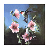 Ruby Throated Hummingbird Posters by Kevin Daniel