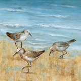 Sandpipers II Posters by Nan